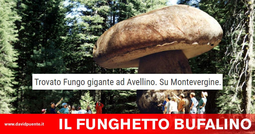 Il fungo sta infettivo
